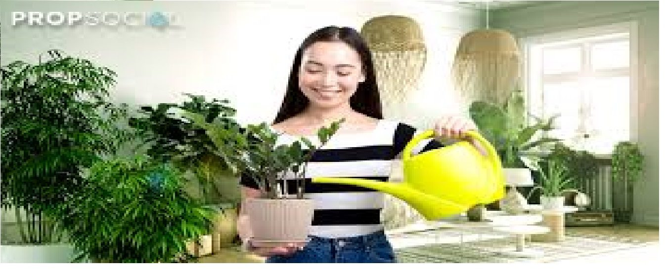 More Than Feng Shui | Health Benefits of Indoor Plants